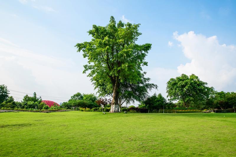 לימור שושן  : העץ הנדיב